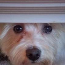 Bouleversant : il coupe les pattes de son chien pour l'empêcher de s'échapper | CaniCatNews-actualité | Scoop.it