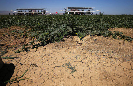 Scary Times For California Farmers As Snowpack Hits Record Lows | Food issues | Scoop.it