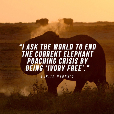 East African safari with Lupita Nyong'o  | Safari365 | Serengeti Safari | Scoop.it
