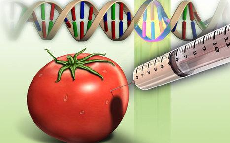 Monsanto intentó patentar tomates, haciendo fraude a leyes de patentes   Transición   Scoop.it