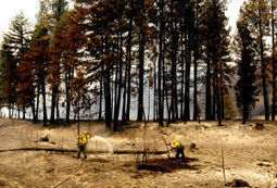 Plum Creek to salvage 7,000 acres burned by Lolo Complex fire | Timberland Investment | Scoop.it