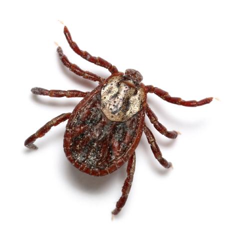 flea tick | Real estate | Scoop.it