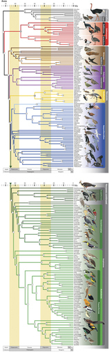 A comprehensive phylogeny of birds (Aves) using targeted next-generation DNA sequencing | Virology and Bioinformatics from Virology.ca | Scoop.it