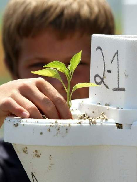 McKeel Students Use Swiftmud Grant for Hydroponic Project | Vertical Farm - Food Factory | Scoop.it