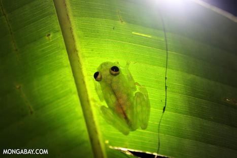 Microhabitats could buffer some rainforest animals against climate change - Mongabay.com   YogaUgo   Scoop.it