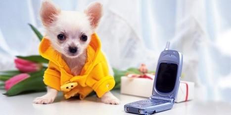 Chihuahua: il cane più piccolo del mondo   best5.it   Vari   Scoop.it