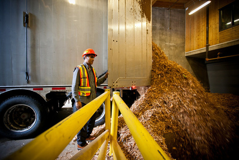 Biomass Fuel: Worse for Climate than Coal?, by Robert McClure   Sustain Our Earth   Scoop.it
