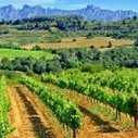 """Cava d'Espagne: peut-il remplacer le champagne?   L'appellation """"Champagne"""" n'est-elle pas une stratégie marketing pour que les producteurs de champagnes français restent compétitfs?   Scoop.it"""