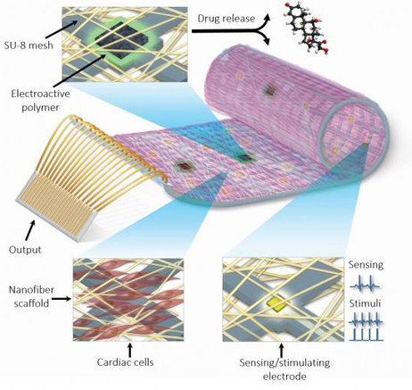Cyborg Heart Patch Replaces Dead Cardiac Tissue with Combination of Healthy Cells, Electronics | | Shaping the Future of Medical Technology | Scoop.it