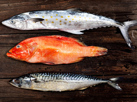 Something Smells Fishy? New Device Sniffs Out Seafood Fraud | Amazing Science | Scoop.it