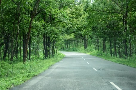 Indian state attempts to plant record 50 million trees in 24 hours | Green Forward - Environment-World | Scoop.it