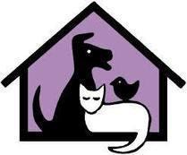 Elk kattenasiel in België vind je hier! - Gratis Kitten Zoeken / Aanbieden   KAP1A7Lara   Scoop.it