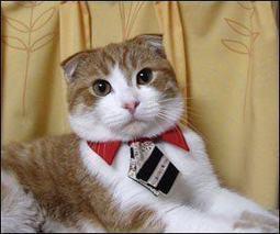 Reglas básicas para la educación del gato - Lindos Mininos | El mejor amigo de tu gato | Paz y bienestar interior para un Mundo Mejor | Scoop.it