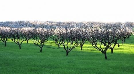 Nuevo método de cálculo determina el valor económico del medio rural | InnovagroEc | Scoop.it