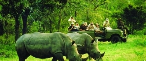 South Africa: A lifetime experience of the Wild | Domestic Flights South Africa | Domestic Flights South Africa | Scoop.it