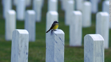 How to post to Facebook, Twitter after you die | Advertising & Media | Scoop.it