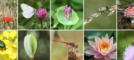 2013 sera-t-elle l'année de la biodiversité en France ? - Actu-environnement.com | CDI RAISMES - MA | Scoop.it