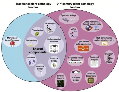 New Phytologist: Hitchhiker's guide to multi-dimensional plant pathology (2014) | news du front | Scoop.it