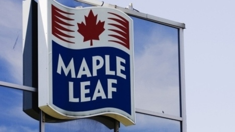 400 layoffs from closure of Maple Leaf Foods plant   CARBIDE TV The Machinist Channel   Scoop.it