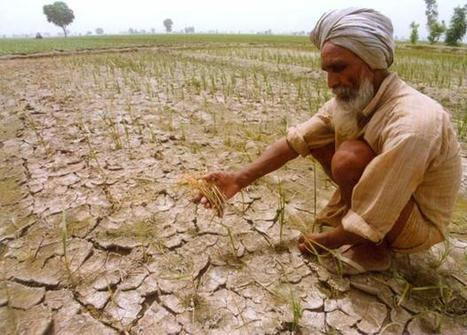 Saving agriculture from weather woes   South Asia Food and Nutritional Security   Scoop.it