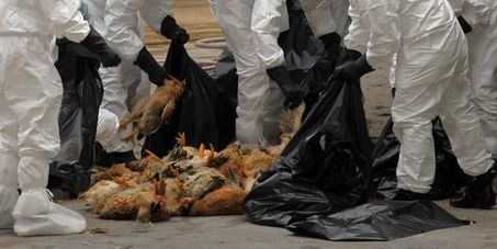 Des scientifiques vont créer des formes plus dangereuses de H7N9 | Galenus Regeneratio | Scoop.it