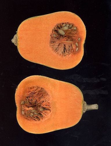 Eat Orange Foods to Reduce Breast Cancer Risk - Counsel & Heal | Healthy Eating - Recipes, Food News | Scoop.it