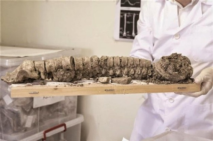 Byzantine skull shows evidence of brain surgery | The Archaeology News Network | Kiosque du monde : Asie | Scoop.it