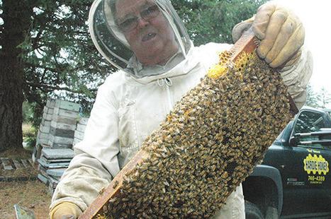 Cowichan Valley honey producers face hive death, zombies - Cowichan Valley Citizen | Confidences Canopéennes | Scoop.it