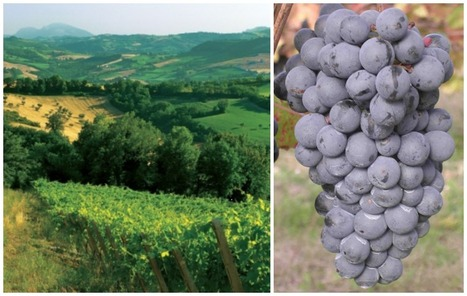 Vernaccia di Serrapetrona: Why does not reach success? | Wines and People | Scoop.it