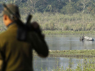 India: Kaziranga officials battle poachers targeting rhino horn | Firstpost | Rhino poaching | Scoop.it