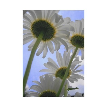 Daisy Day Wrapped Canvas Gallery Wrapped Canvas at Zazzle.ca | Wall Art | Scoop.it