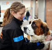 Bunny's Blog: ASPCA Opens Emergency Boarding Center to Help Victims of Hurricane Sandy | Pet News | Scoop.it