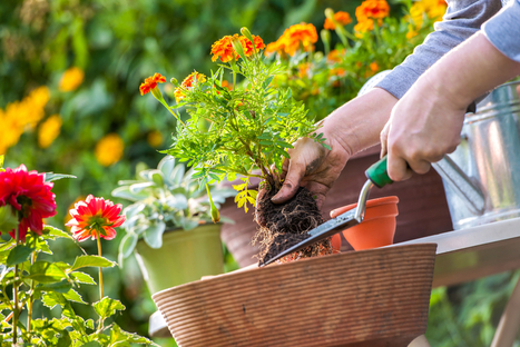 Planning Your Yard's Landscaping With Flowers and Vegetables | Leaf Cleanup | Scoop.it