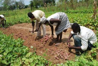 Climate change on agenda at 1st Africa Congress on Conservation Agriculture   Sustainable Agriculture   Scoop.it