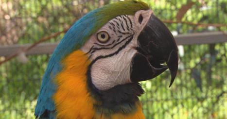 How parrots help veterans with PTSD | LGBT Network | Scoop.it