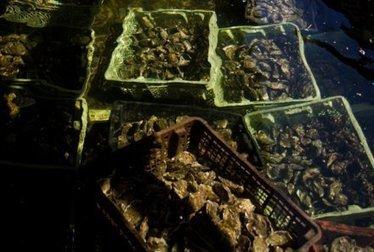 Bleuuurp, dit l'huître en rotant du plastique | environnement et santé | Scoop.it