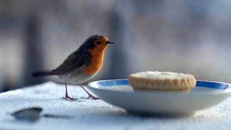 Watch the epic Waitrose Christmas advert 2016: Meet the Scandi robin taking on Buster the Boxer | Branding Business | Scoop.it