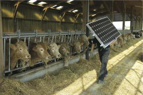 Développement durable » Energie et GES : l'agriculture, bonne élève | Filière élevage et viande | Scoop.it