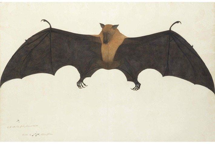 A great Indian fruit bat helps Bonhams Islamic and Indian Art Sale take wing with £4.5 M sale | Art Daily | Kiosque du monde : Asie | Scoop.it
