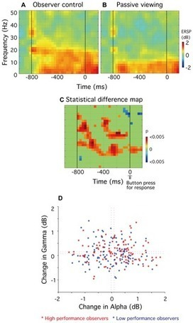 PLOS ONE: The Relationship between Self-Awareness of Attentional Status, Behavioral Performance and Oscillatory Brain Rhythms | Social Neuroscience Advances | Scoop.it