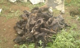 Congo Gets Tough on Wildlife Traffickers | Wildlife Trafficking: Who Does it? Allows it? | Scoop.it