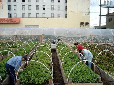 Vancouver urban farm sites face hurdles due to soil contamination - Vancouver Sun (blog) | Vertical Farm - Food Factory | Scoop.it