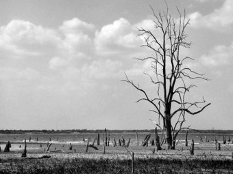 Texas Drought May Have Killed 500 Million Trees   Climate change challenges   Scoop.it