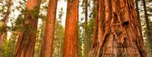 Les plus belles forêts du Monde | Les plus beaux sites et paysages naturels en France | Scoop.it
