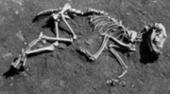 Dogs Gone Mild - ScienceNOW | Cinófilia | Scoop.it