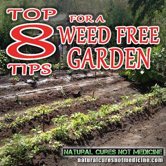 Natural Cures Not Medicine: Weed Free Organic Gardening | Lawn Maintenance | Scoop.it