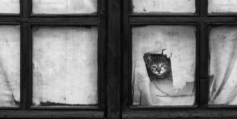 30 Melancholic Cats Waiting For Their Humans To Return | Green Art Cafe | Scoop.it