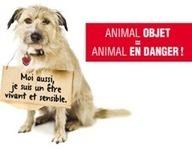 Manifeste pour le changement de statut des animaux dans le code civil   Fondation pour la Nature et l'Homme créée par Nicolas Hulot   problématique   Scoop.it