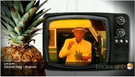 [vidéo] L'ananas sème misère et pollution | Global Mag, le blog | Toxique, soyons vigilant ! | Scoop.it