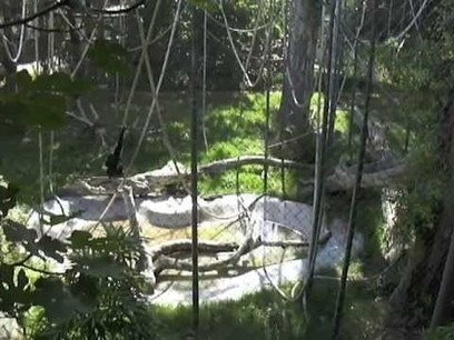 Chafee Zoo in Fresno Ca-A Wild life Walking tour | DirectPayBiz | Scoop.it